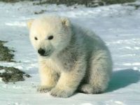 Medvíde