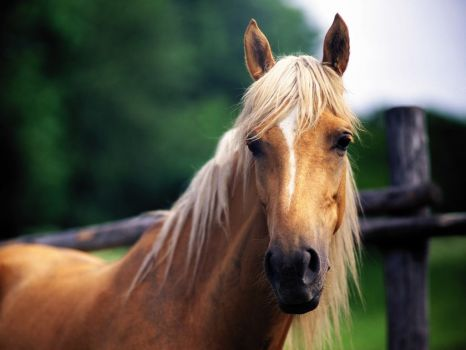 Horses_wallpapers_177