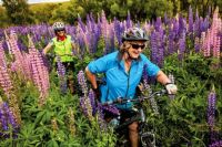Wild Lupins and bikers
