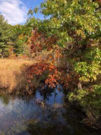 Fall Foliage and Reflections