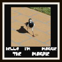 ==  HELLO   I'M   MAGGIE   THE   MAGPIE  ==