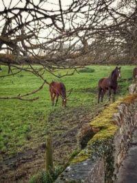 ..stone fence in  ireland