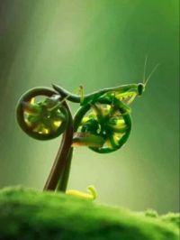 New prototype Motorcycle: The Mantis.....