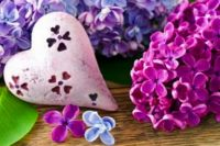 lilac-flowers-heart