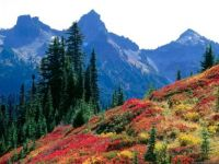 fall-spectrum-in-the-tatoosh-range_washington