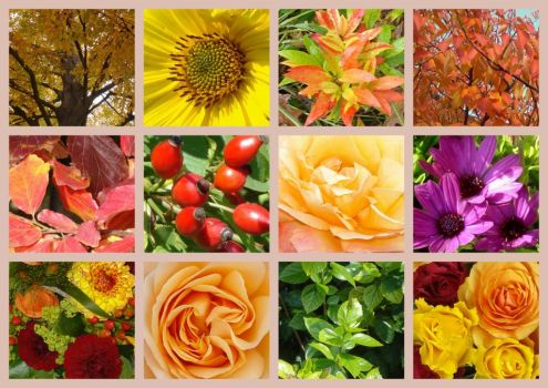 autumnal flowers and colours