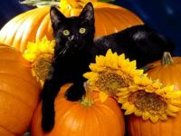 this is my cousins cat midnight   ^_^ i thought he would be great for a halloween pic.