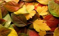 Theme - Colors of Fall