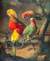 Golden Pheasant, Cuban Amazon and two Sun Parakeets