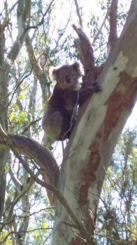 Hi there, koala