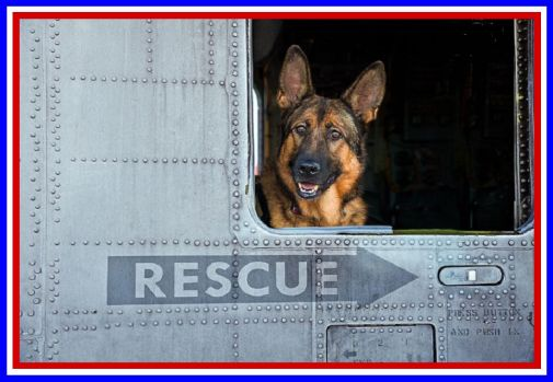 THEME ~ Honor the Military (service dogs too)