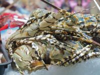 Queen Victoria Market - Lobster