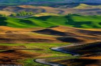 Mike Brandt's Palouse Hills