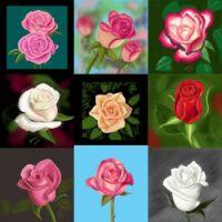 rosegroup