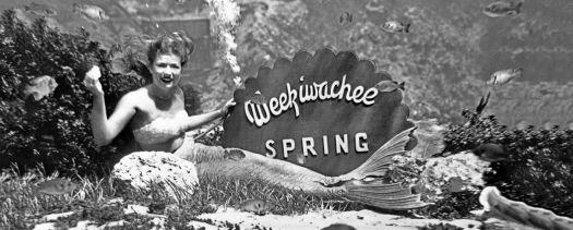 OOOPS  I forgot to post this one last week, magical creatures, the mermaids of Weeki Wachee Springs