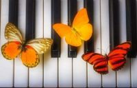 Three butterflies on Piano Keys