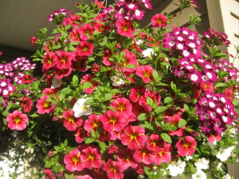 """Mother""""s Day hanging basket"""