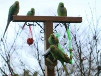 """The Gang"" visiting our feeder pole."