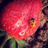 Confused-lady-bug
