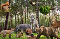 Forest_Animals