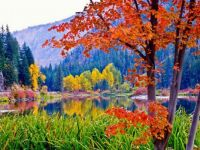 THEME: Reflections of Fall