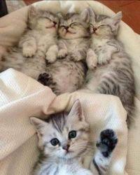 Fluffy Bundle of Joy