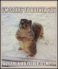 Polite Squirrel