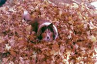 Lily in the Leaves