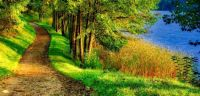 path-tunnel-trees-near-lake-scenic-nature-autumn-landscape-panorama-view-115358410