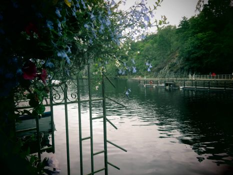 Flowers on the Dock of Loch Katrine