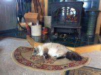 Cat keepin warm