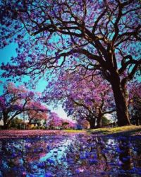 Colorful Tree scene.