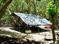 Our camp - under the pisonia trees!