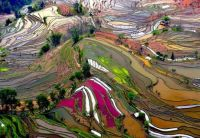 Terrace Rice Fields, China