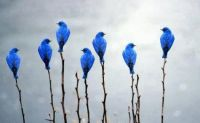 Blue Birds on trees
