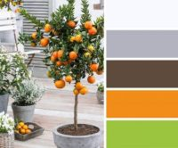 Little Orange Tree