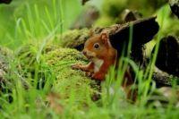 Veverka_Squirrel