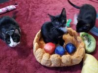 """fruit tart cat bed"""