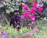 Ringo in Roses