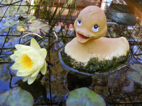 Rubber Duckie in Lily Pond