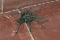 Spider outside room