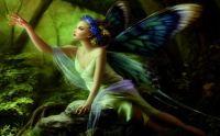 butterfly wings fairy