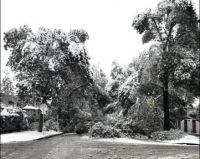 There are lots of branches down and trees bent to the ground in Crescent Heights this morning