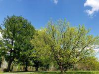 Algonkian Park, Sterling VA 04-15-2020
