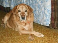 MY MAGGIES BIRTHDAY TO DAY 11 YEARS OLD