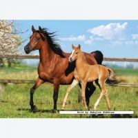 260-pcs---mare-and-foal-by-castorland