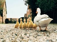 Farm-Animals-Collection-domestic-animals-5356758-1024-768