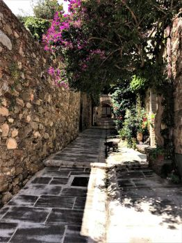 Cat in the Alley, Grimaud, France