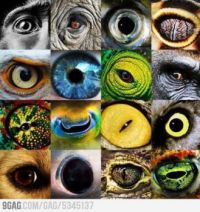 Awesome animal eyes!