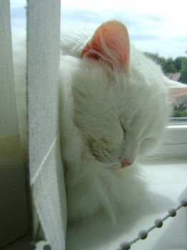 Freya - Counting raindrops makes me sleepy...